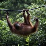 8_Borneo